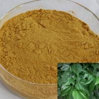MULBERRY LEAF EXTRACT (1-DNJ)