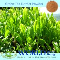Factory Supply 100% Natural Green Tea Extract/Green Tea Extract Powder/Green Tea Powder 98%Tea Polyphenols